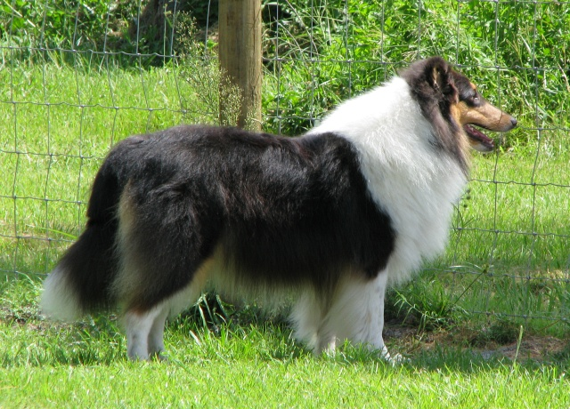 Sheranda Collies,         Megan