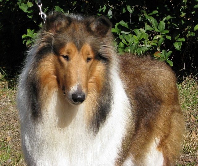 "Diamante's Little Deuce Coupe ""Summer"" now at         Sheranda Collies"